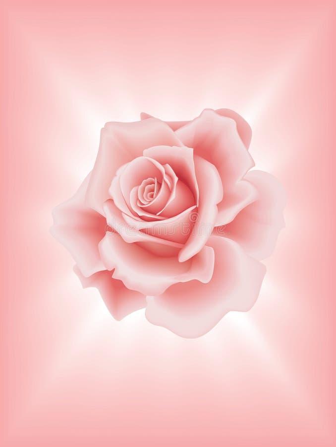 2粉红色上升了 库存例证