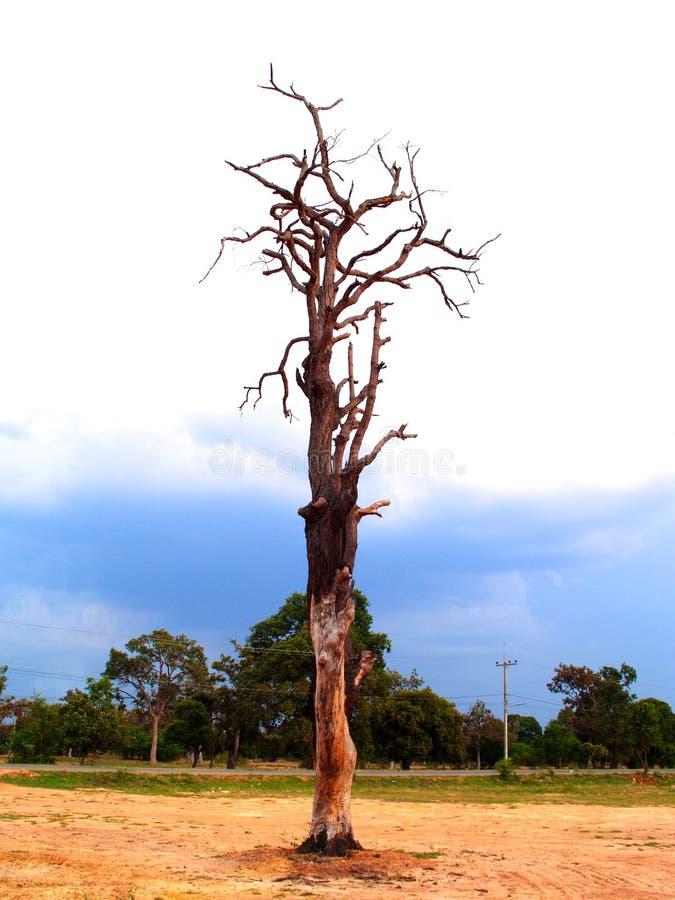 2结构树 库存照片