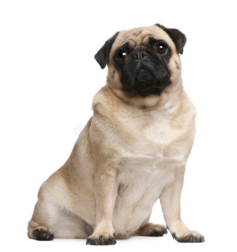 2老哈巴狗坐的年 免版税库存照片