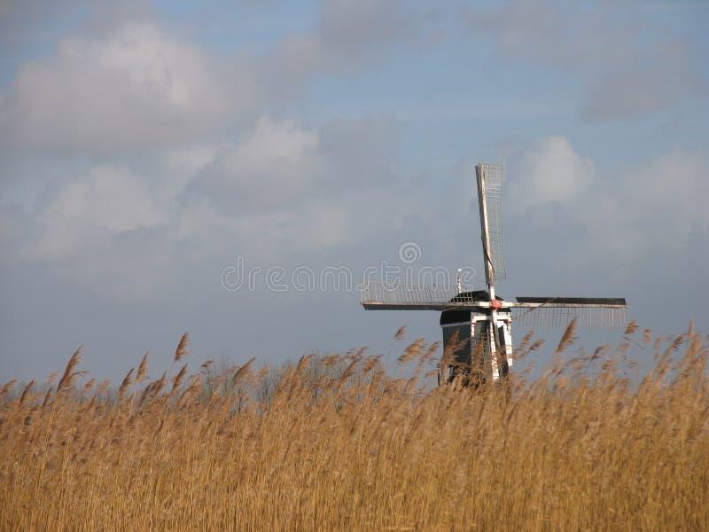 2荷兰语使芦苇环境美化 免版税库存图片