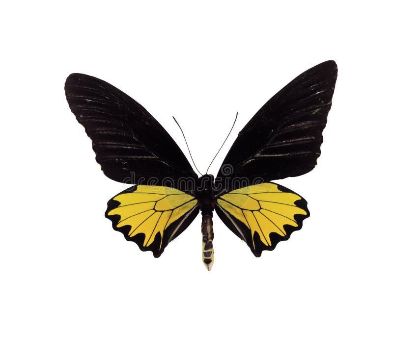 2蝴蝶 免版税库存照片
