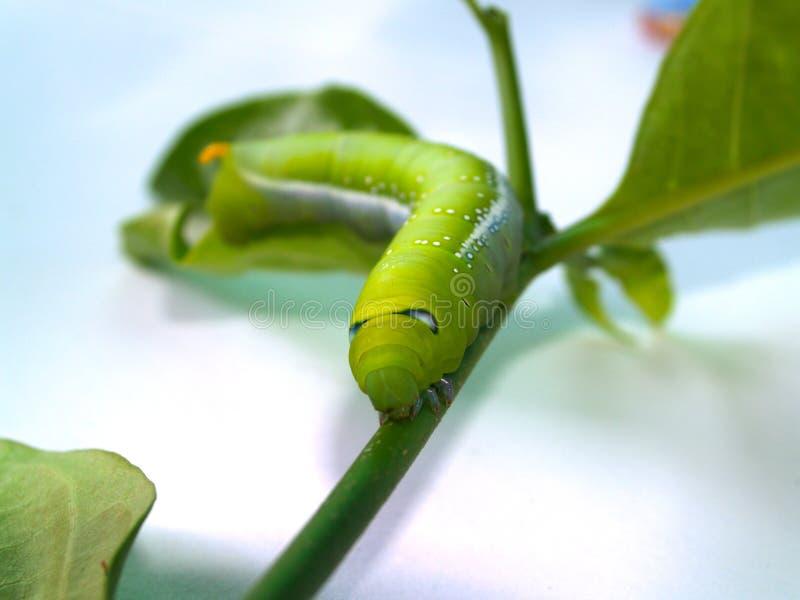 2蠕虫 免版税图库摄影