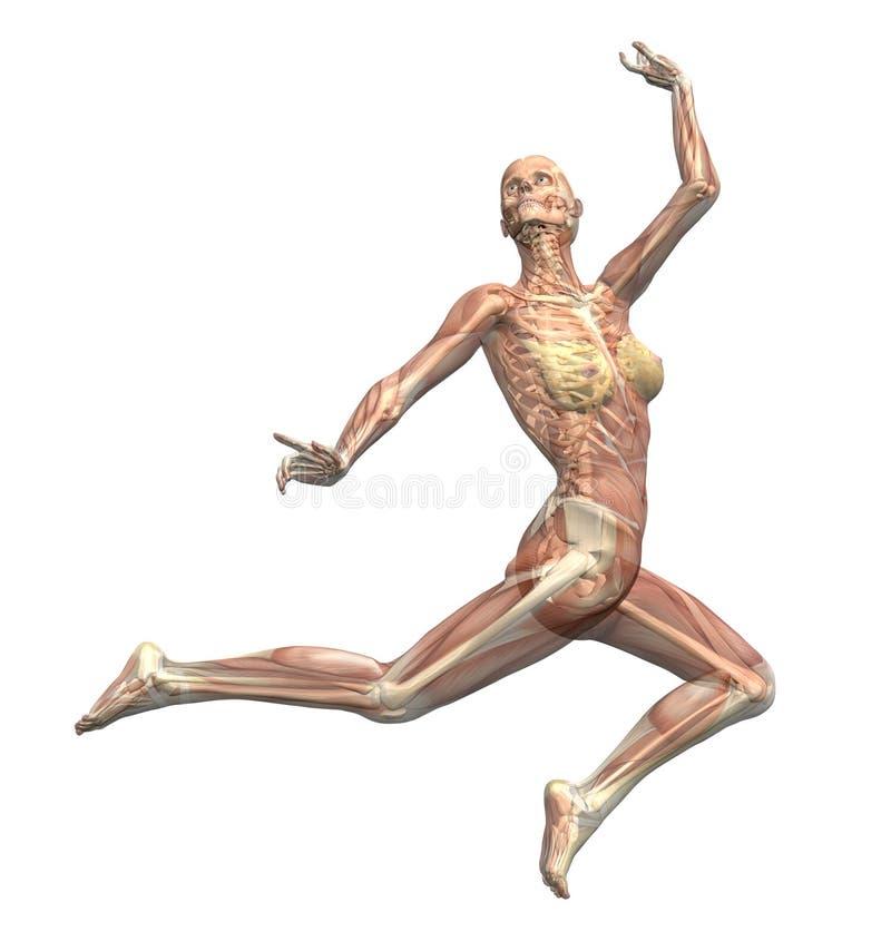 2解剖学行动 向量例证