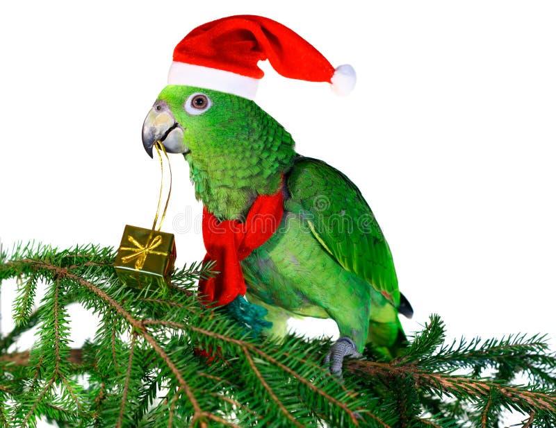 2鹦鹉圣诞老人 图库摄影