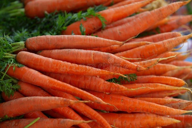 2 καρότα στοκ φωτογραφία με δικαίωμα ελεύθερης χρήσης