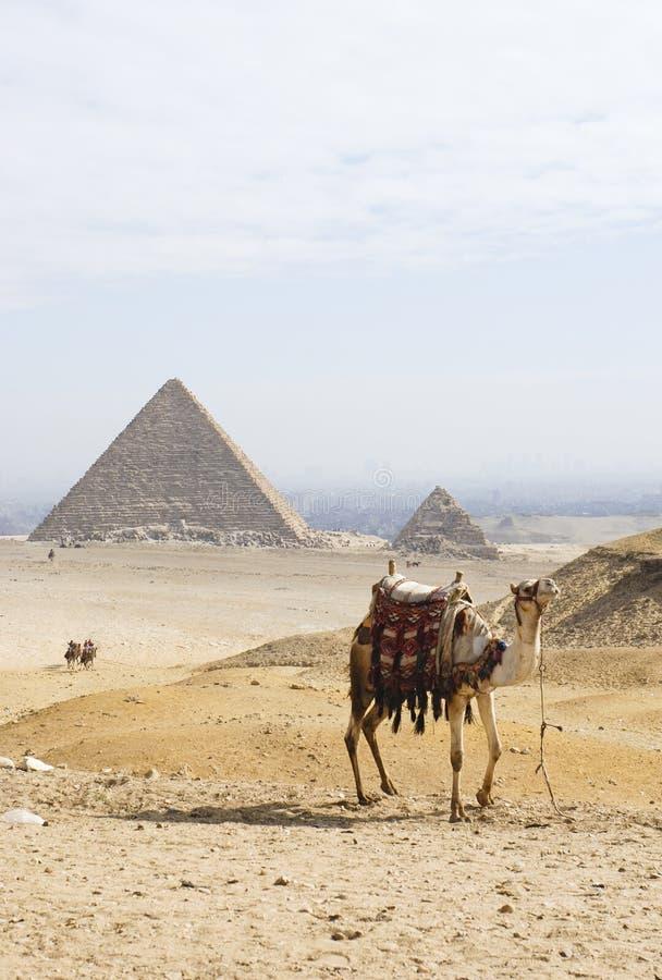 2 πυραμίδες καμηλών στοκ φωτογραφίες