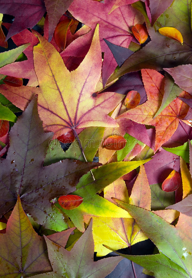 2 φύλλα φθινοπώρου στοκ φωτογραφίες