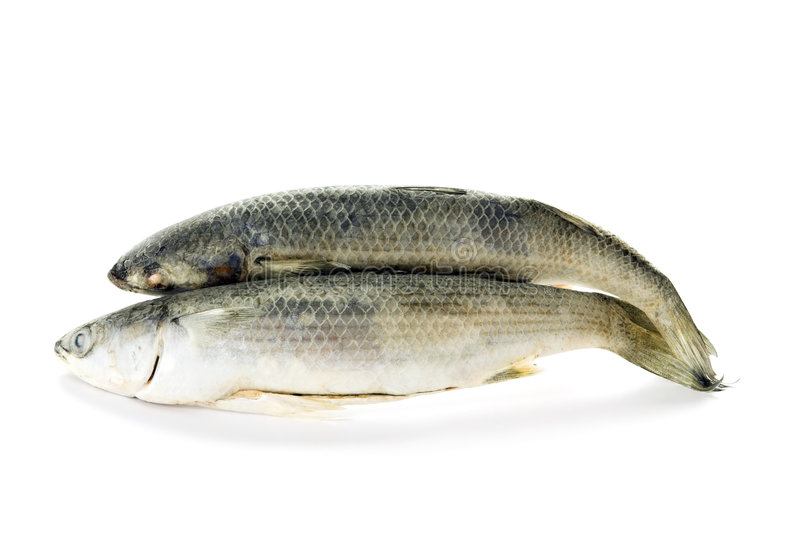 2 ψάρια παγωμένα στοκ φωτογραφίες με δικαίωμα ελεύθερης χρήσης