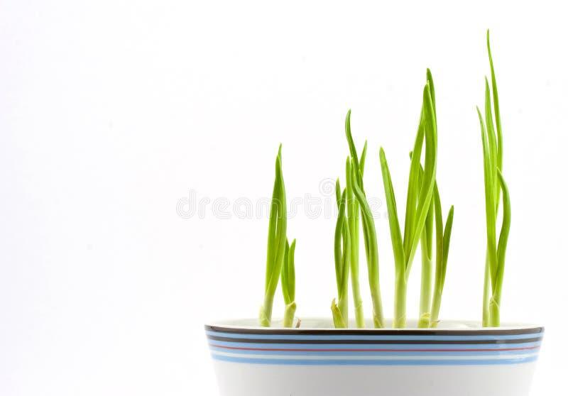 2 зеленого цвета стоковая фотография