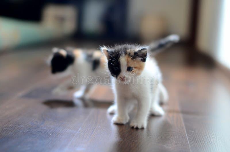 2 котят стоковое фото
