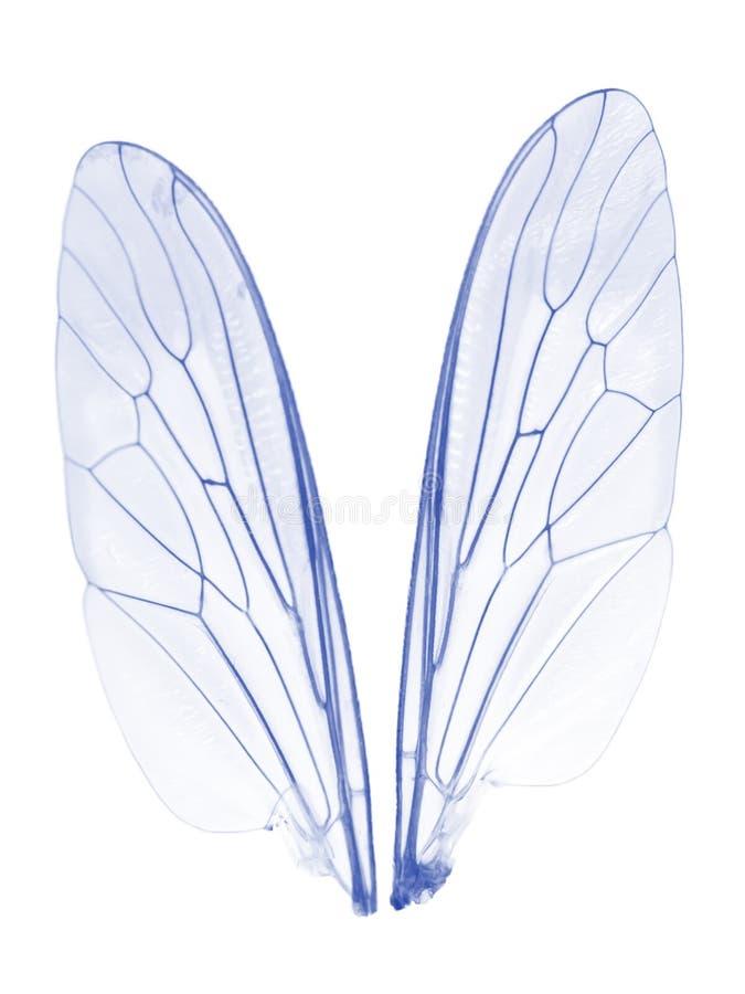 2 крыла стоковые изображения rf