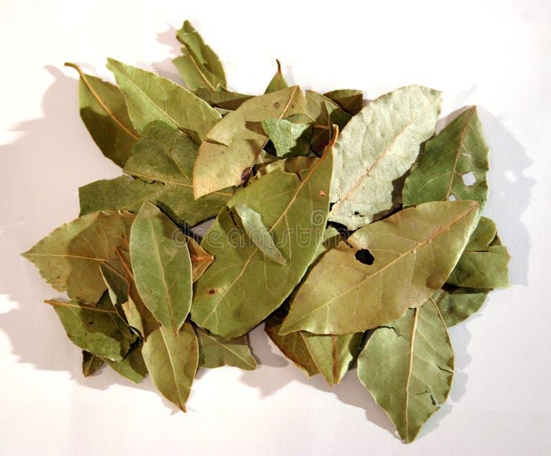 2 листь залива стоковое изображение
