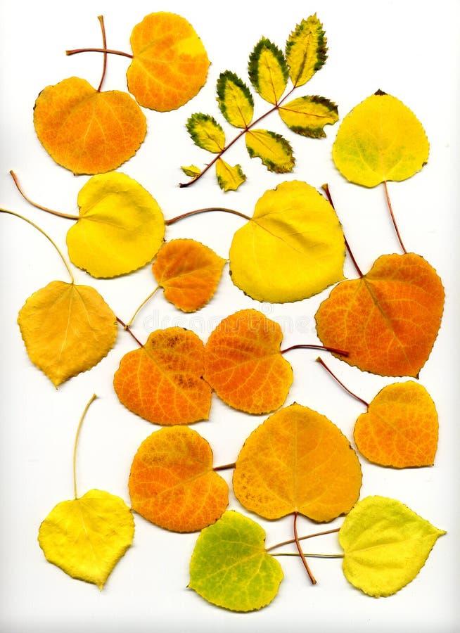2 листь падения стоковое фото rf