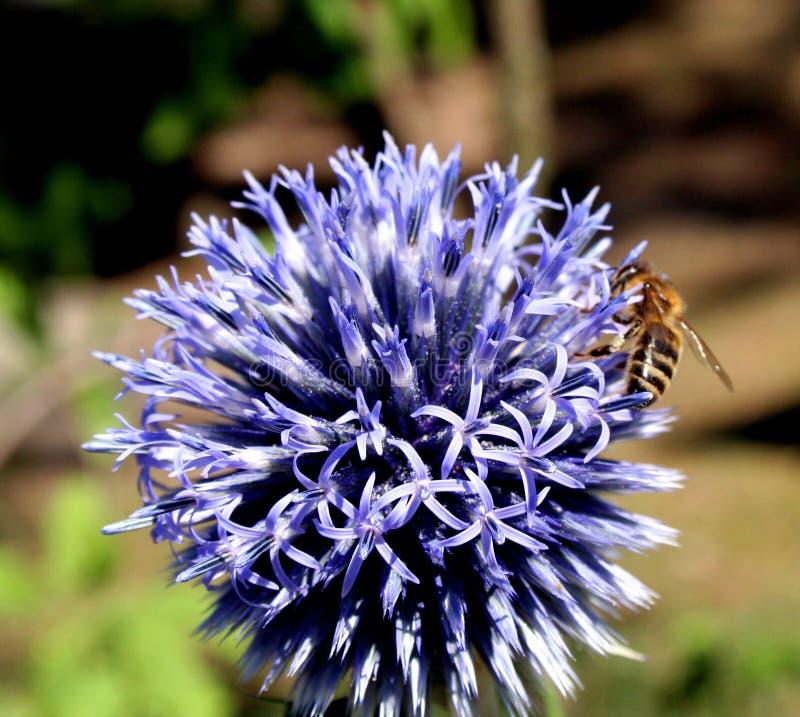 2 пчелы стоковое изображение