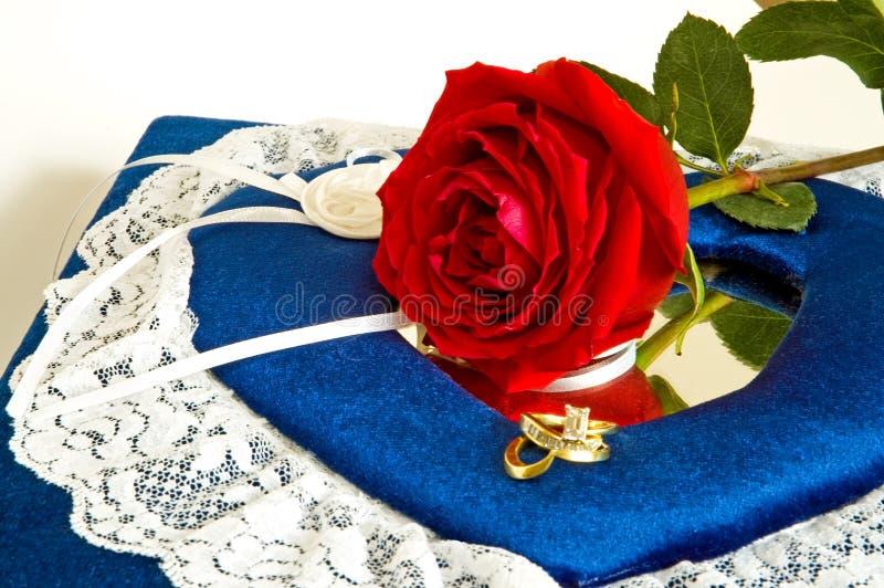 2 розы кец стоковая фотография rf
