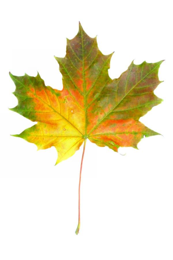 2 цвета осени стоковая фотография rf