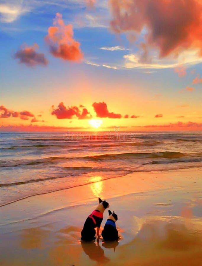 2 собаки на пляже на заходе солнца