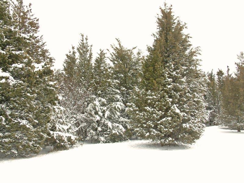 2个公园雪 免版税库存图片
