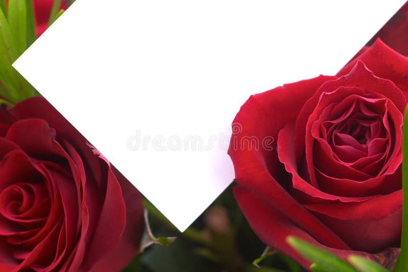 2朵红色玫瑰 免版税库存照片