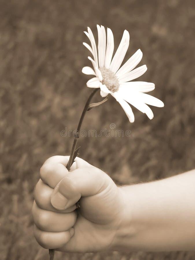Download 2您 库存照片. 图片 包括有 雏菊, 钉子, 词根, 孩子, 子项, 夹子, 情感, 手指, 现有量 - 59302
