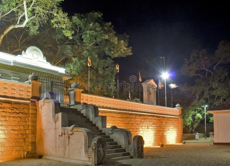 2 anuradhapura bodhi Maha sri zdjęcia royalty free