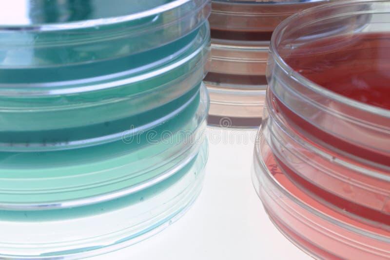 2 bacteriological medel arkivbild