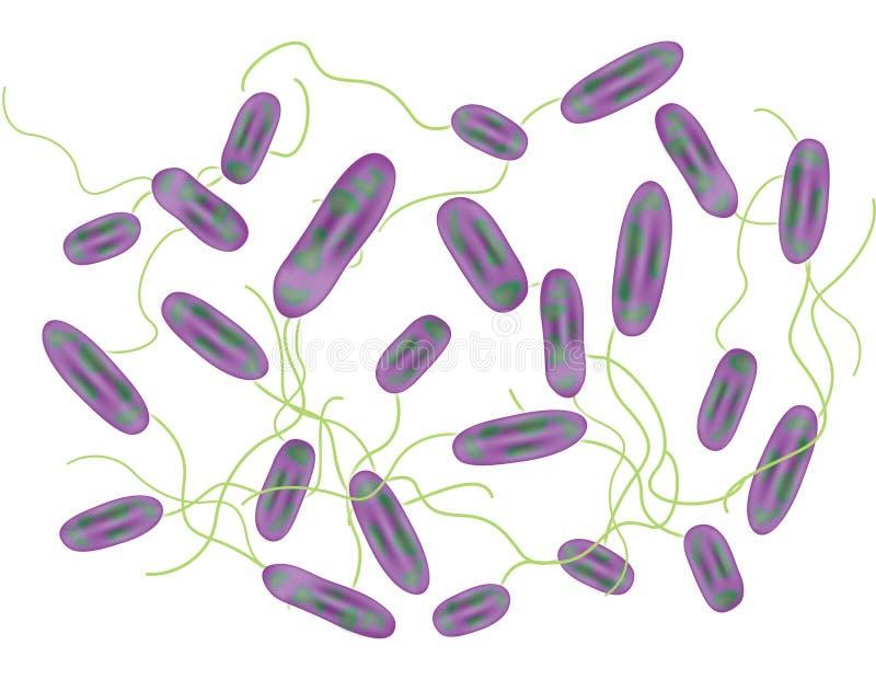 2 bakterii royalty ilustracja