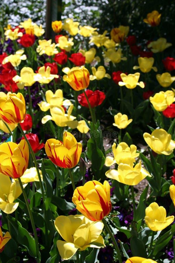2 blommor arbeta i trädgården fjädern arkivfoton