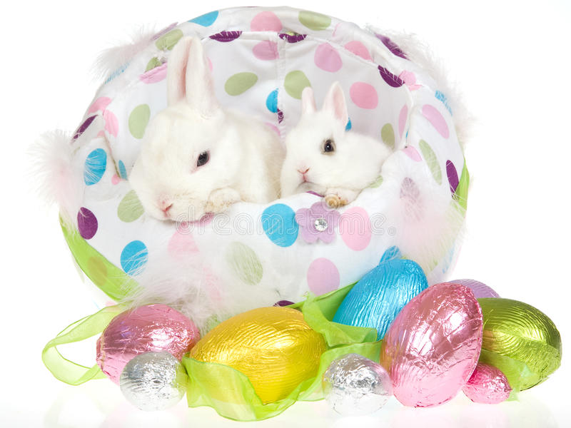 Download 2 bunnies with easter eggs stock image. Image of large - 10595719
