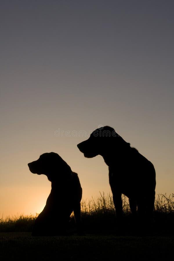 2 cães no nascer do sol fotografia de stock