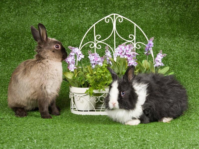 2 coelhos no gramado verde com flores fotos de stock royalty free