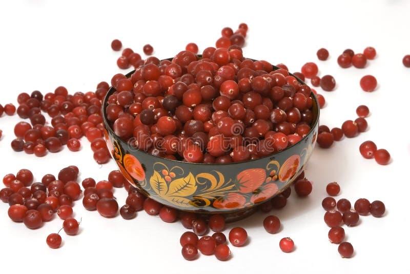 2 cranberries fotografering för bildbyråer