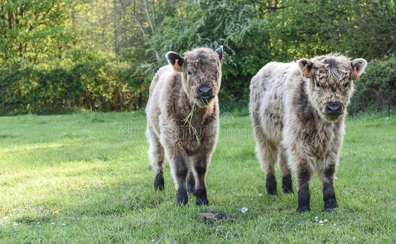 2 Cub在绿草调遣 库存图片