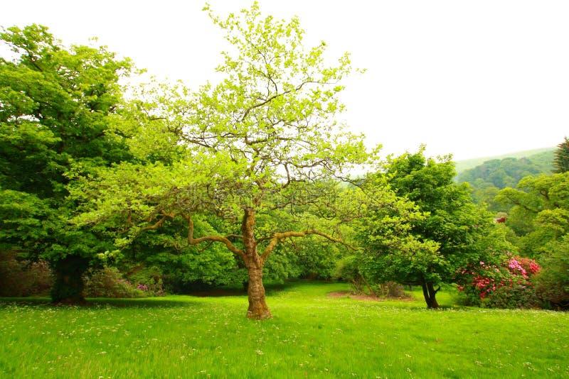2 cudowna ogrodowa wiosna fotografia royalty free