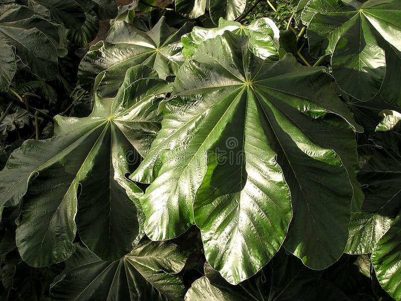 2 dżungli liści konsystencja zdjęcia stock
