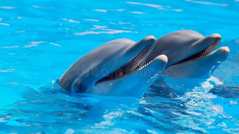 2 Dolphin During Daytime Free Public Domain Cc0 Image