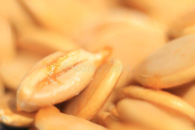 2 dyniowego nasion zdjęcie royalty free