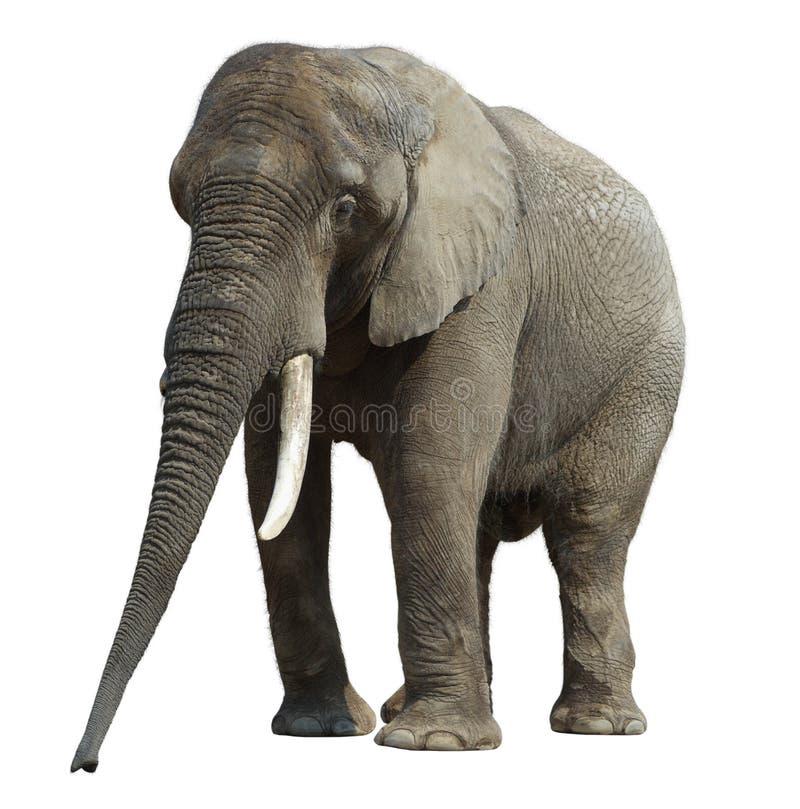 2 elefant zdjęcie stock