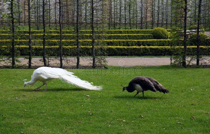 2 Exotic Birds In Park Stock Photos