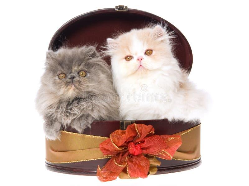 Download 2 Gatinhos Persas Bonitos Na Caixa De Presente Imagem de Stock - Imagem de cabelo, borgonha: 10066497
