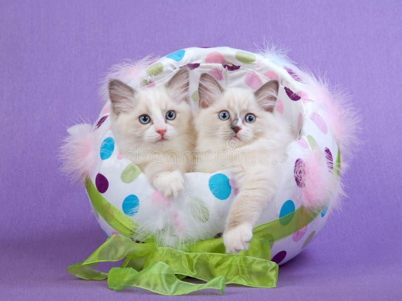 2 gattini svegli di Ragdoll in uovo di Pasqua fotografie stock libere da diritti