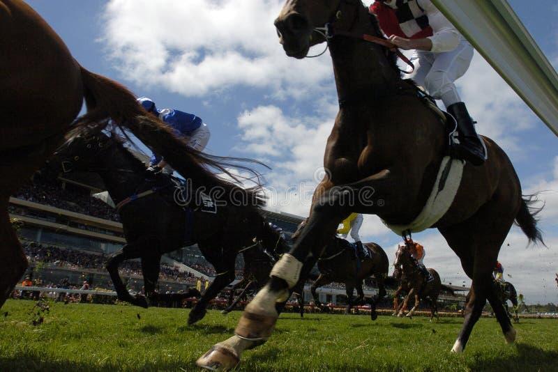 2 horseracing fotografia royalty free