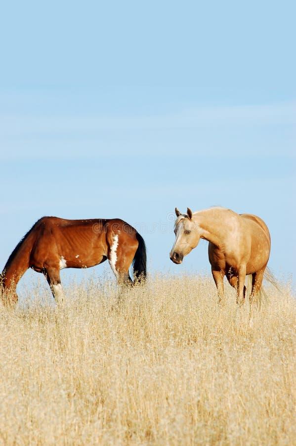 Free 2 Horses Stock Photography - 12213732