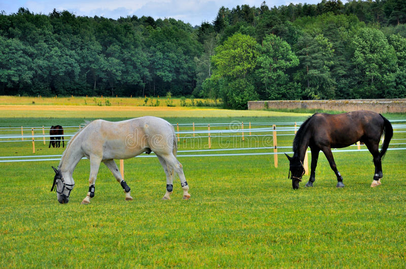 Download 2 Horses Eating Grass Near Schloss Fasanarie Stock Image - Image: 24096661