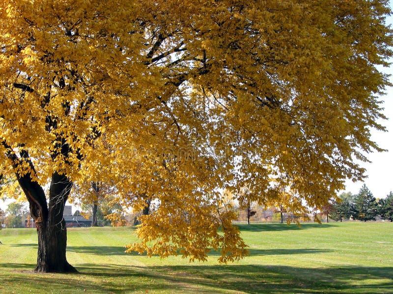 2 jesienią drzewo obrazy royalty free