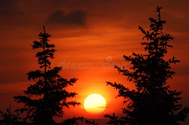 2 jodeł słońca zdjęcia stock