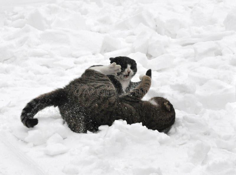 2 katten in de sneeuw stock foto's