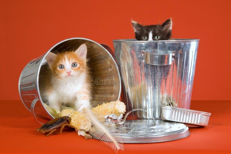2 kittens in dustbins on orange stock photo