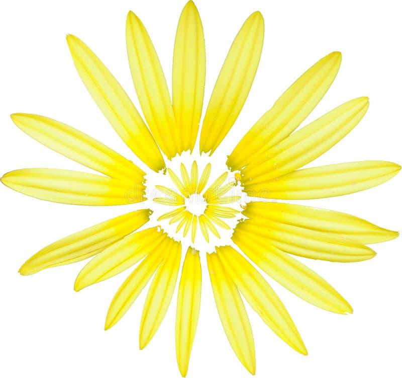 2 kwiatów biel kolor żółty zdjęcia stock