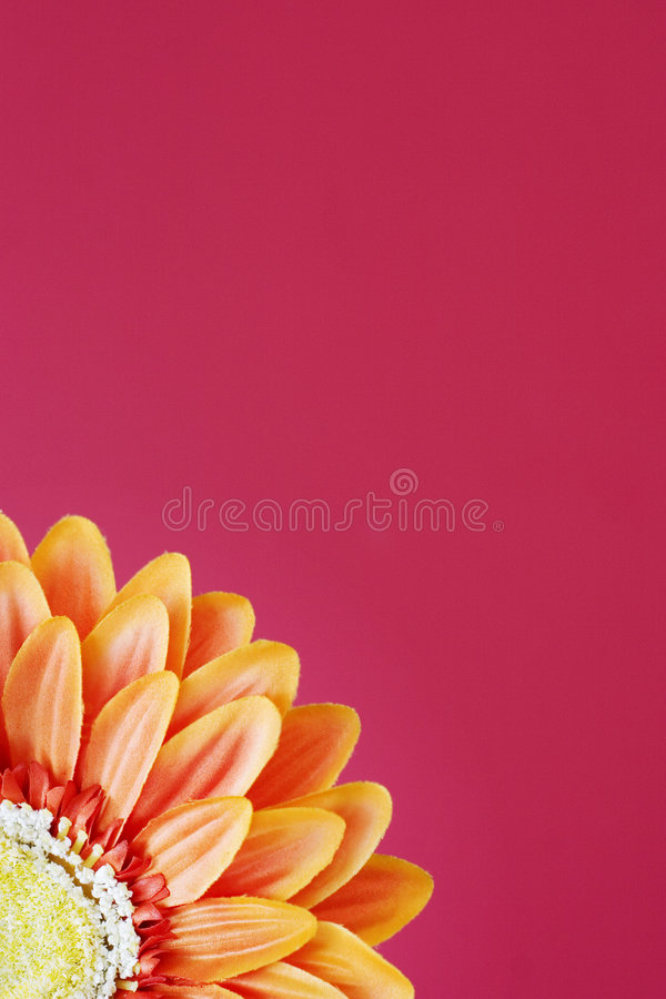 2 kwiaty pomarańczy zdjęcia stock